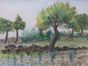Italia - Zagroda bawołów