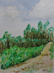 Leśne wydmy